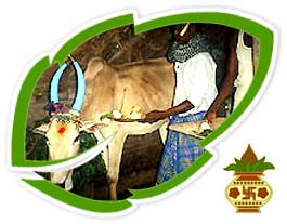 Pongal essay for kids